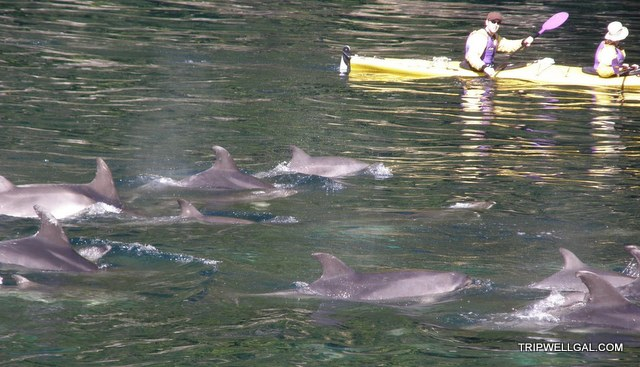 New Zealand: World Heritage Site and Bottle Nose Dolphins