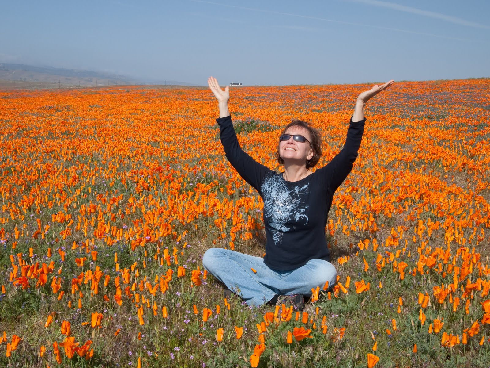 Wildflower Wonder in California's Antelope Valley Poppy Reserve