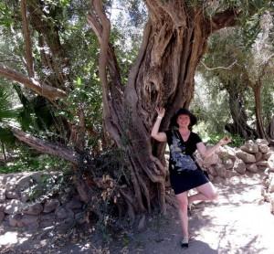 Loreto, Mexico tree with ancient tree
