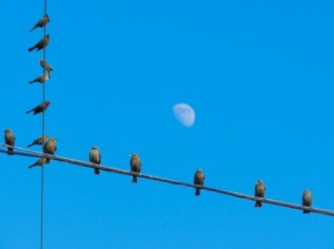 birds wire moon