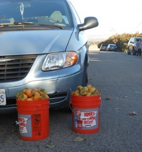 persimmon buckets car