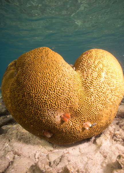 A dive buddy romance – One couple, tropical waters and Cozumel Island