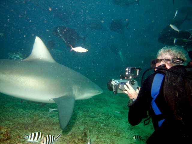 Scuba diving with Chuck Nicklin and Bull shark