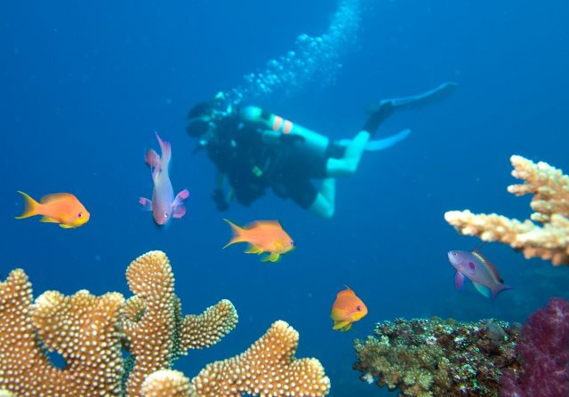 Elaine diving Fiji