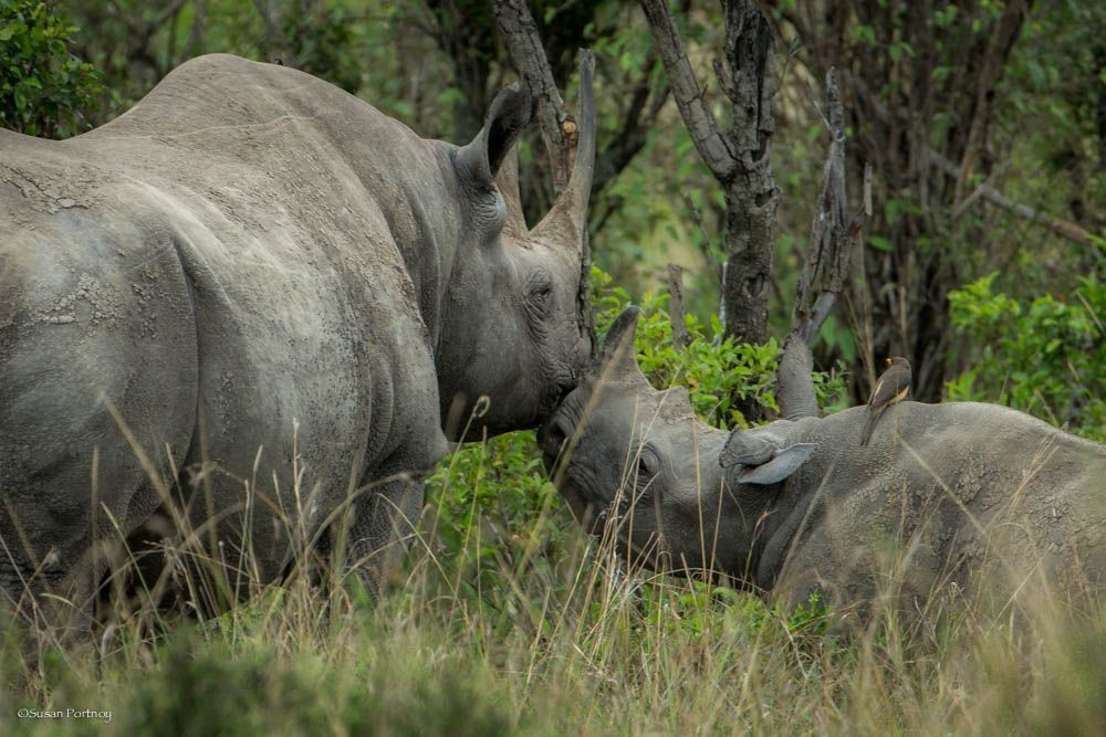 Finite – Save Just One Rhino
