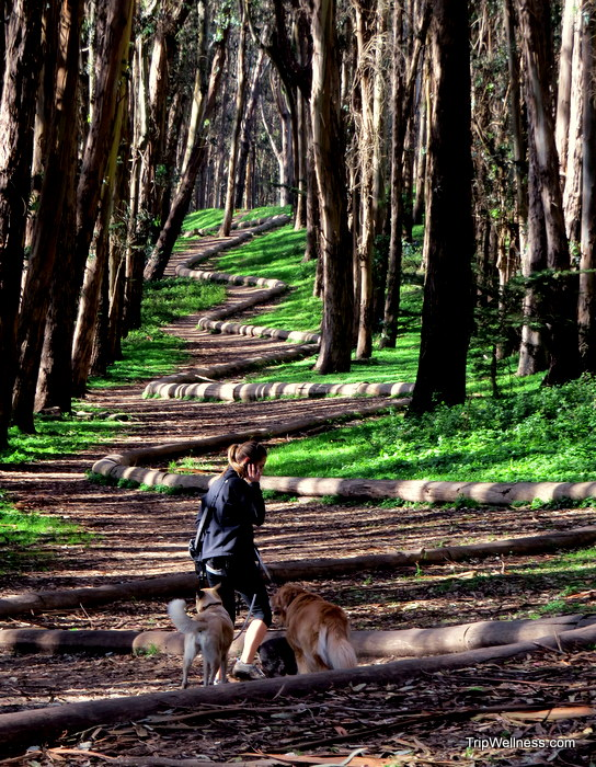 Woodline by Andy Goldsworthy in the Presido, San Francisco, Trip Wellness, Exploring San Francisco