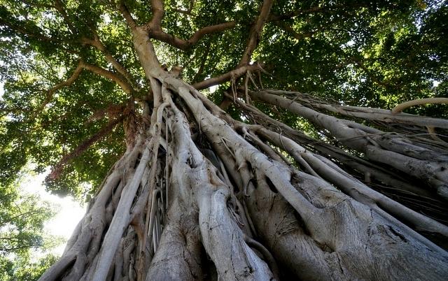 Banyan Tree, Lolani Palace, trip wellness
