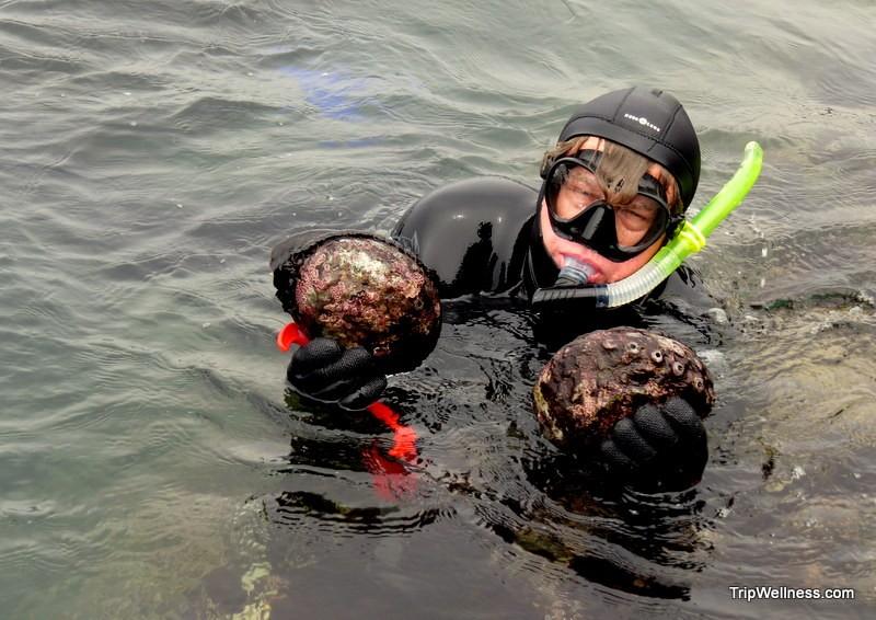 Wild abalone harvest