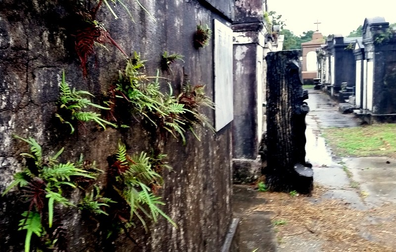 Ferns sprout from walls on the oldest tombs in the cemetery, New Orleans..