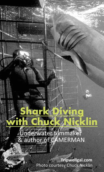 Shark diving with Chuck Nicklin, Great White Pinnable image