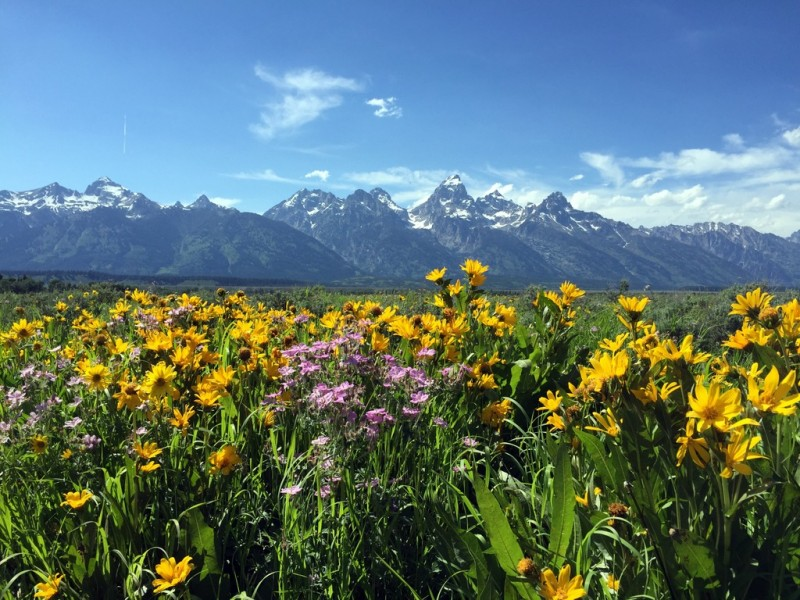 Grand Teton National Park, top pictures