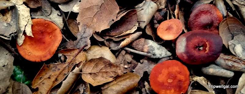 The thrill of the hunt: Wild, edible mushrooms in San Diego
