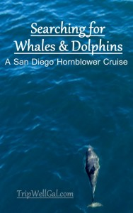 One of many dolphins spied while on a San Diego whale watching adventure