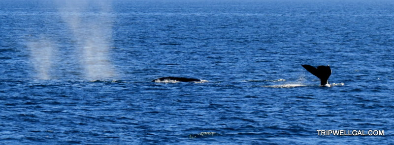Why make excuses? San Diego whale watching is thrilling