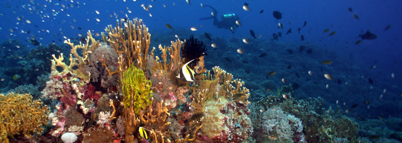 Diving Tubbatha Reef – UNESCO World Heritage Site