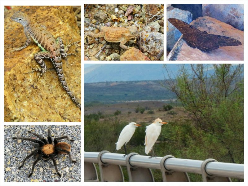 Texas critters for your road trip planner