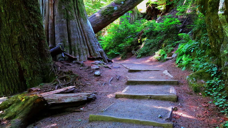 One of dozens of trails available around Mount Rainier.