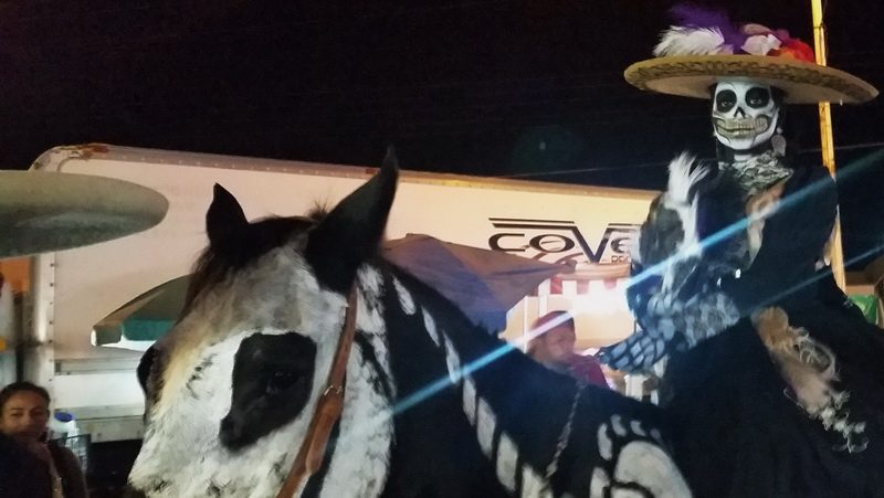 Even horses are decorated for the La Paz, Mexico Festival