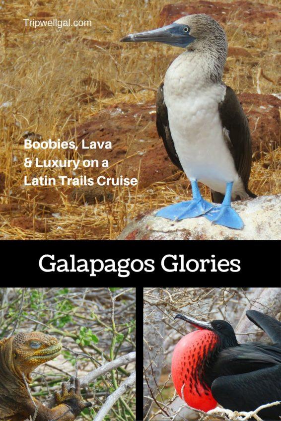 Galapagos Island Glories on a Latin Trails Cruise