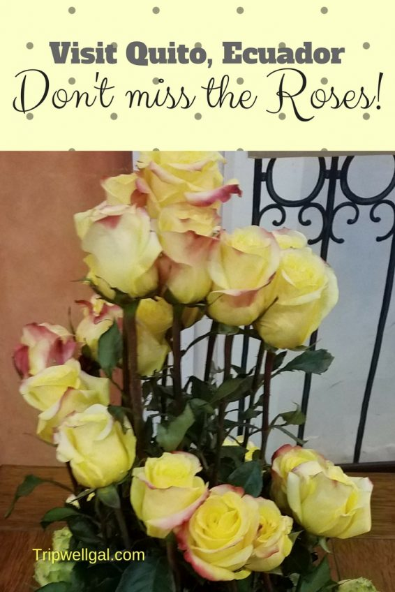 Quito Roses in a Pinterest friendly graphic