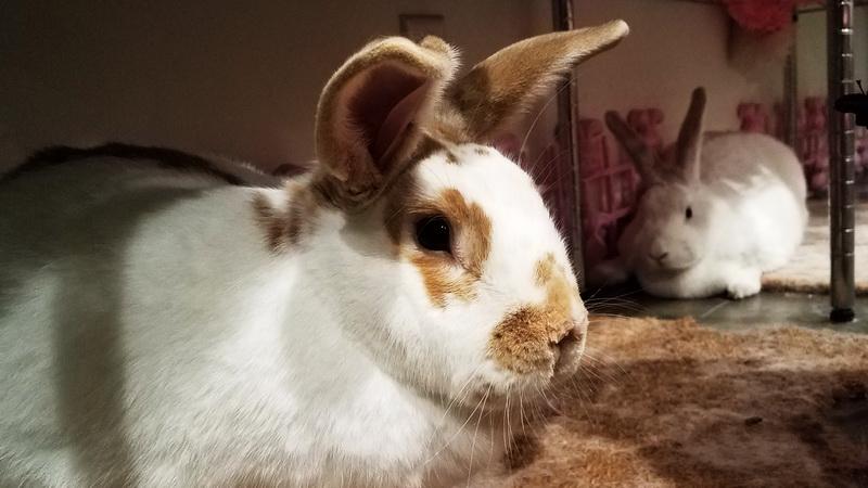 Bunny encounter inside the Bunny Museum