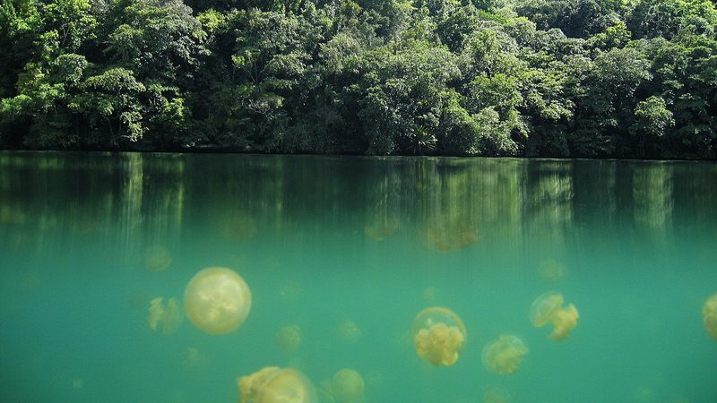 Jellyfish Lake before climate warming - Image Wiki Commons