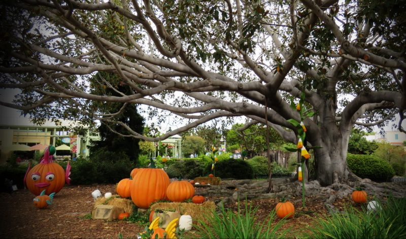 Seaworld San Diego Halloween Tree