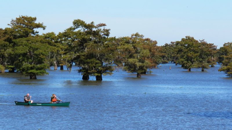 Canoeing in the Atchafalaya Basin near Lafayette, Louisiana