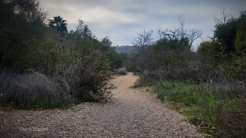 Into the woods on a self guided trail in San Diego