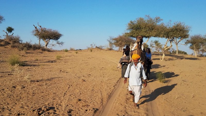 Camel cart ride in the Thar Desert