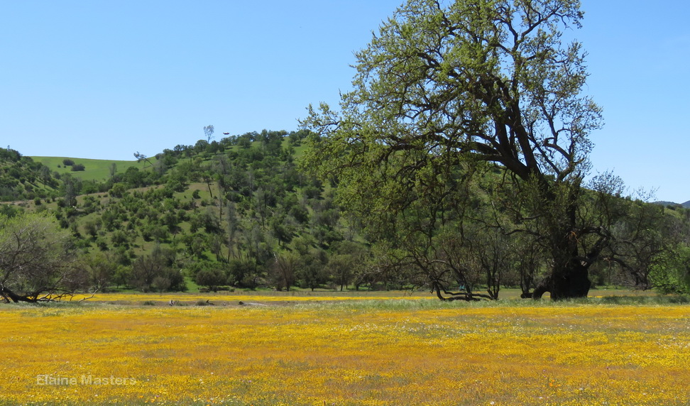 Get outside! The healing power of wildflowers and a scenic view