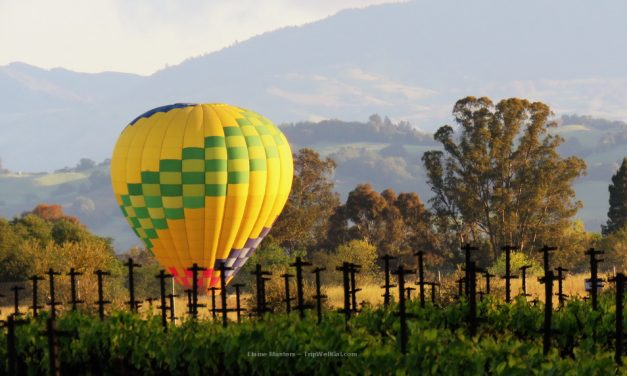 Five Sonoma Vineyards for the Best Sustainable Dine and Wine Selection