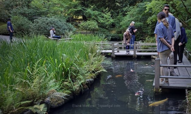 The Portland Japanese Garden Experience – Tea house and Japanese landscape