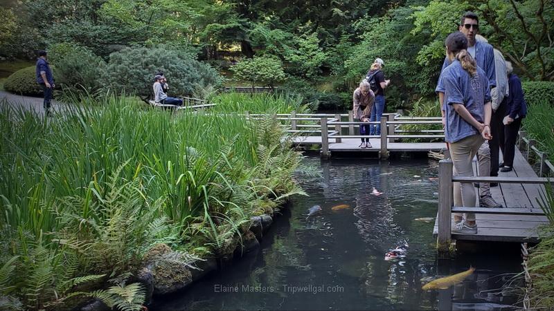 The Portland Japanese Garden Experience – Tea house and Japanese landscape