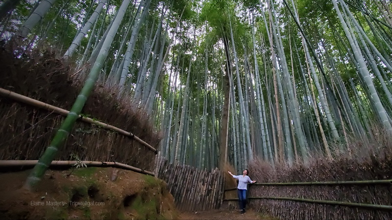 Elaine in awe inside a bamboo grove in Kyoto
