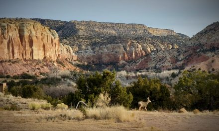 Ghost Ranch Hikes In Georgia O'Keeffe's Footsteps
