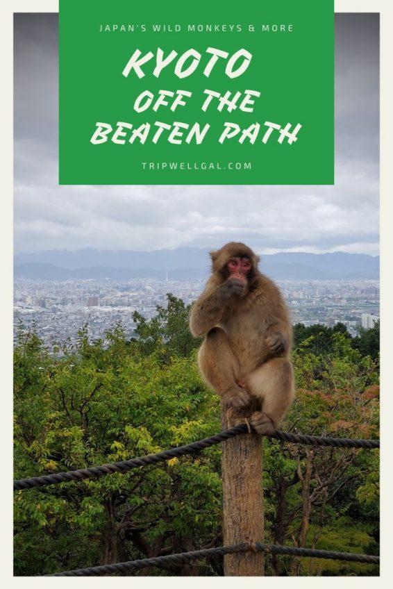 Kyoto off the beaten path includes wild monkeys
