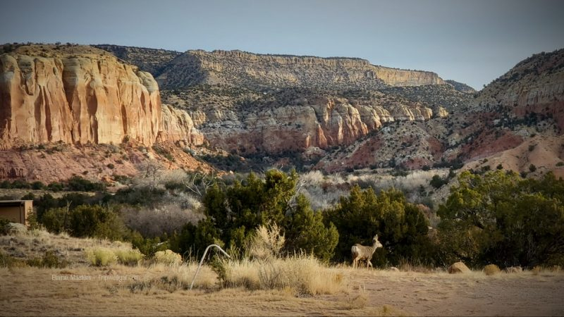 Box Canyon at Ghost Ranch a perfect transformative travel destination for nature lovers.