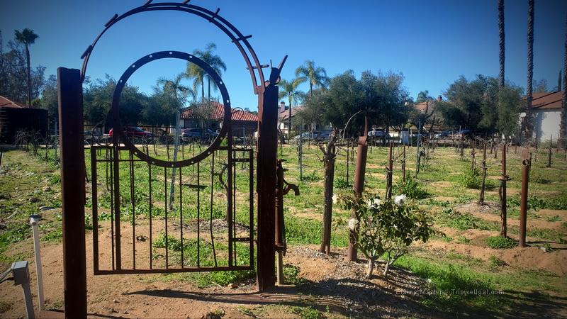 The Bernardo Winery Vineyard in winter