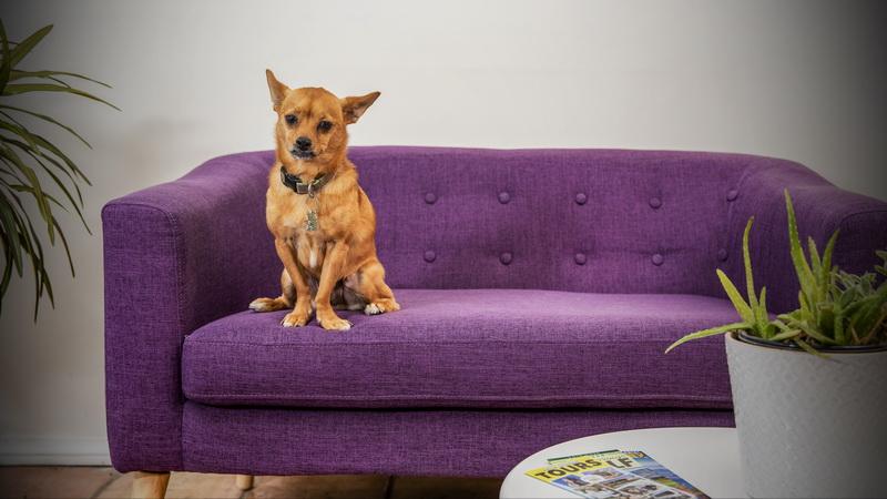 Mascot pup, Gus, at the Inn at Palm Springs