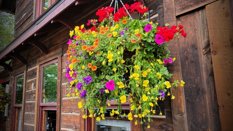One of the many hanging flower baskets along Main Street Breckenridge